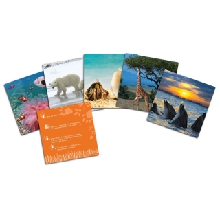 Wild About Animals Snapshots™ Critical Thinking Photo Cards